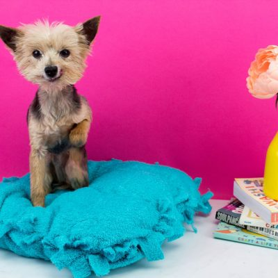Craft Projects for Your Pets thumbnail