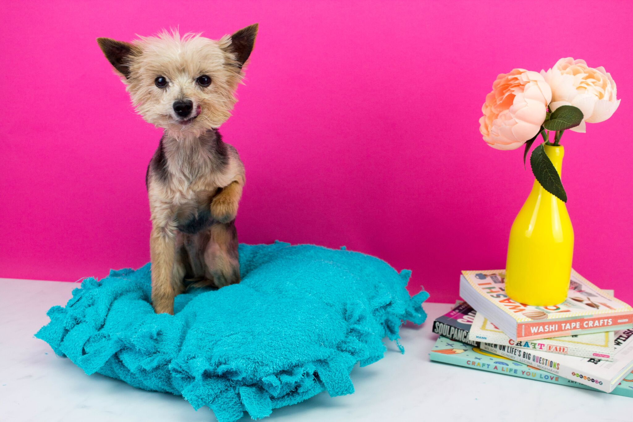 Diy No Sew Pet Bed A Little Craft In Your Day