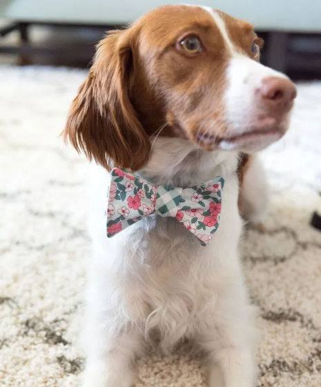 Regal looking dog wearing a dog bow tie