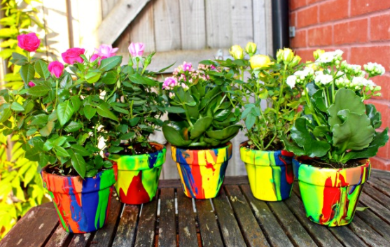 Flower pots painted in rainbow color with flowers planted on it