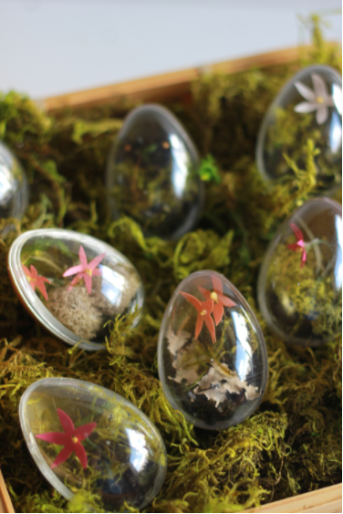 Clear Easter egg with a fake terrariums inside