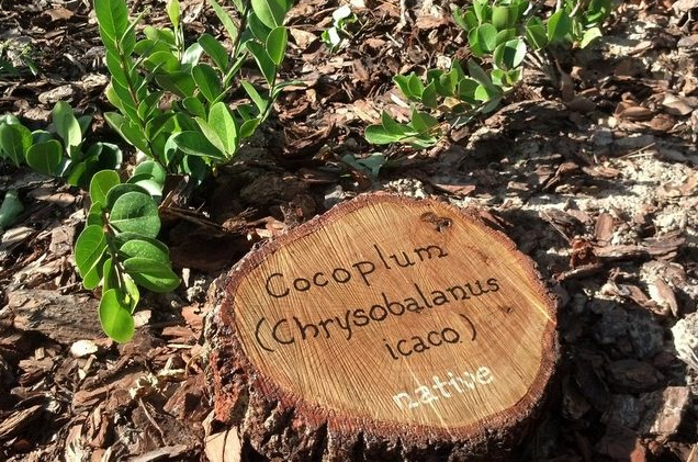 Homemade garden signs or cookies from tree rounds